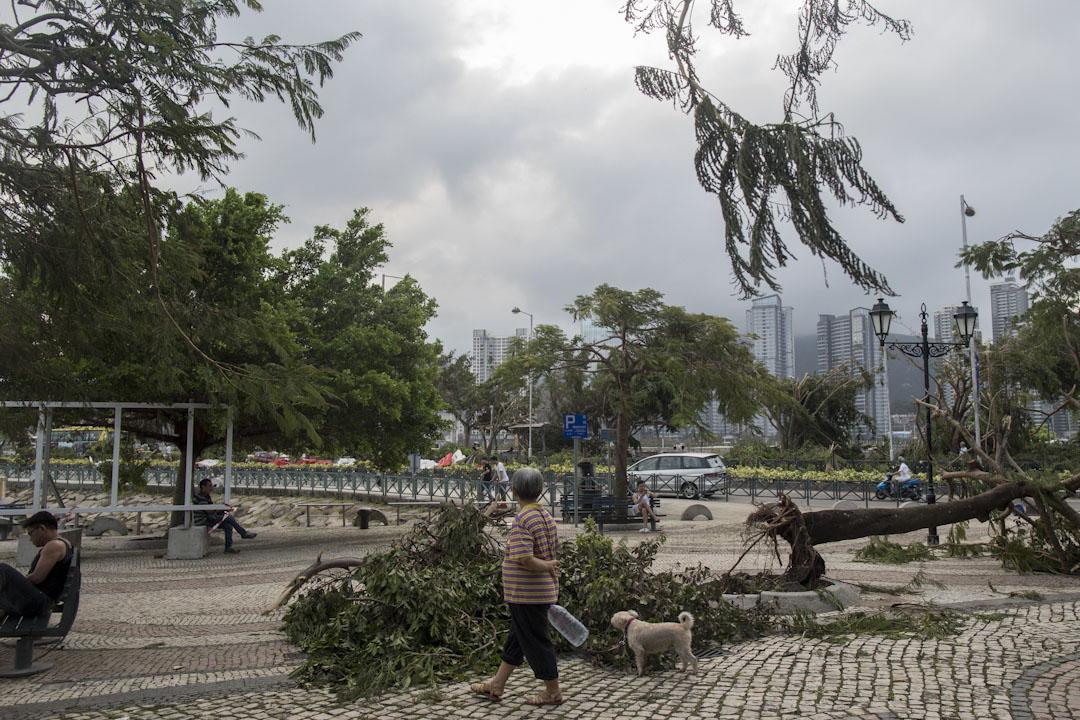 颱風「天鴿」吹襲後,澳門居民到市面觀察損毀情況。