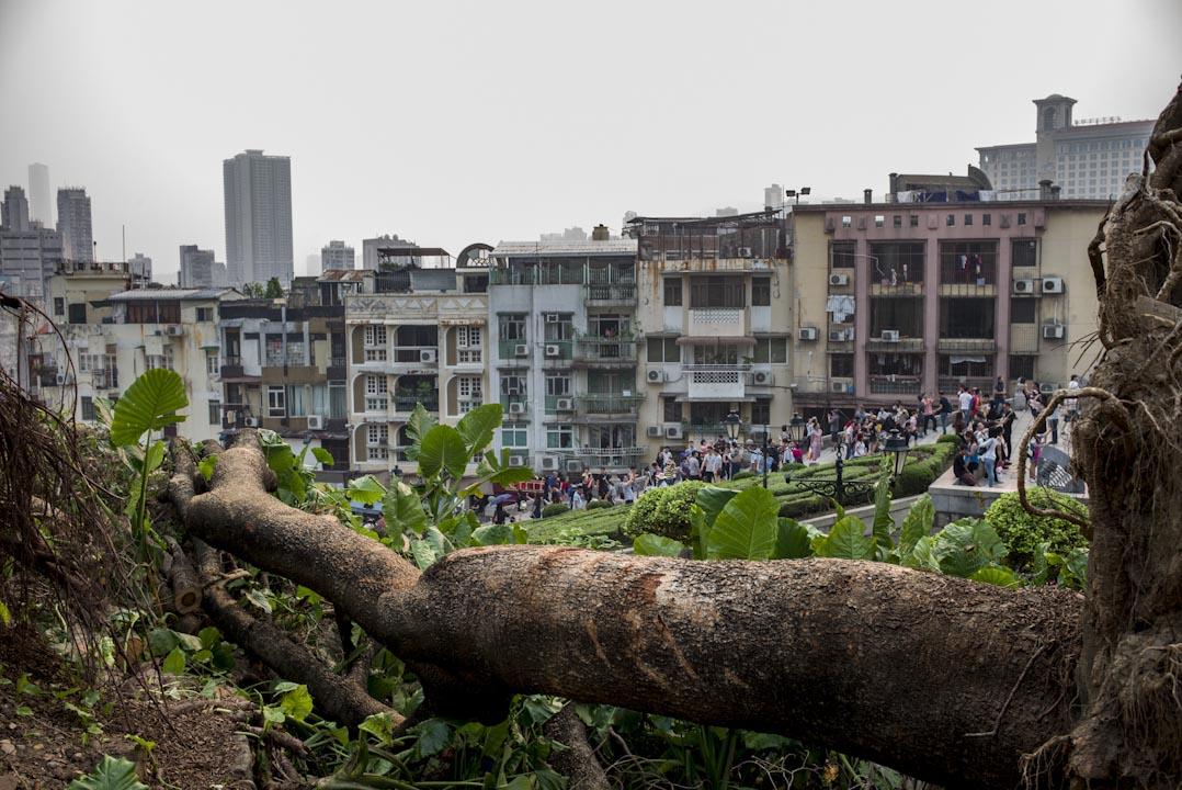 2017年9月17日,澳門第六屆立法會選舉投票日,大三巴牌坊外遊客眾多,颱風「天鴿」吹襲而倒下的大樹在旁。