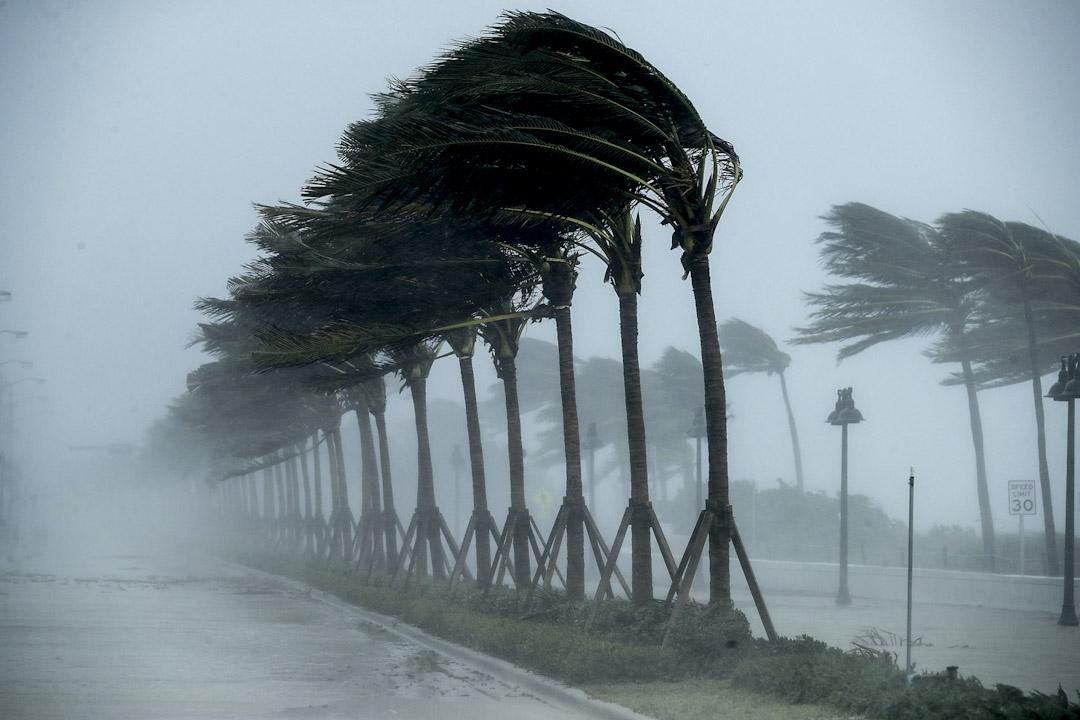 2017年9月10日,颶風「艾瑪」吹襲吹襲美國佛羅里達州,勞德代爾堡海灘大道上的樹木被吹至彎曲。