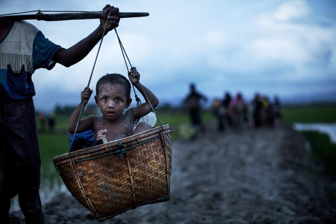 2017年9月1日,羅興亞族小孩坐在擔挑裡橫越稻田逃離緬甸前往孟加拉。