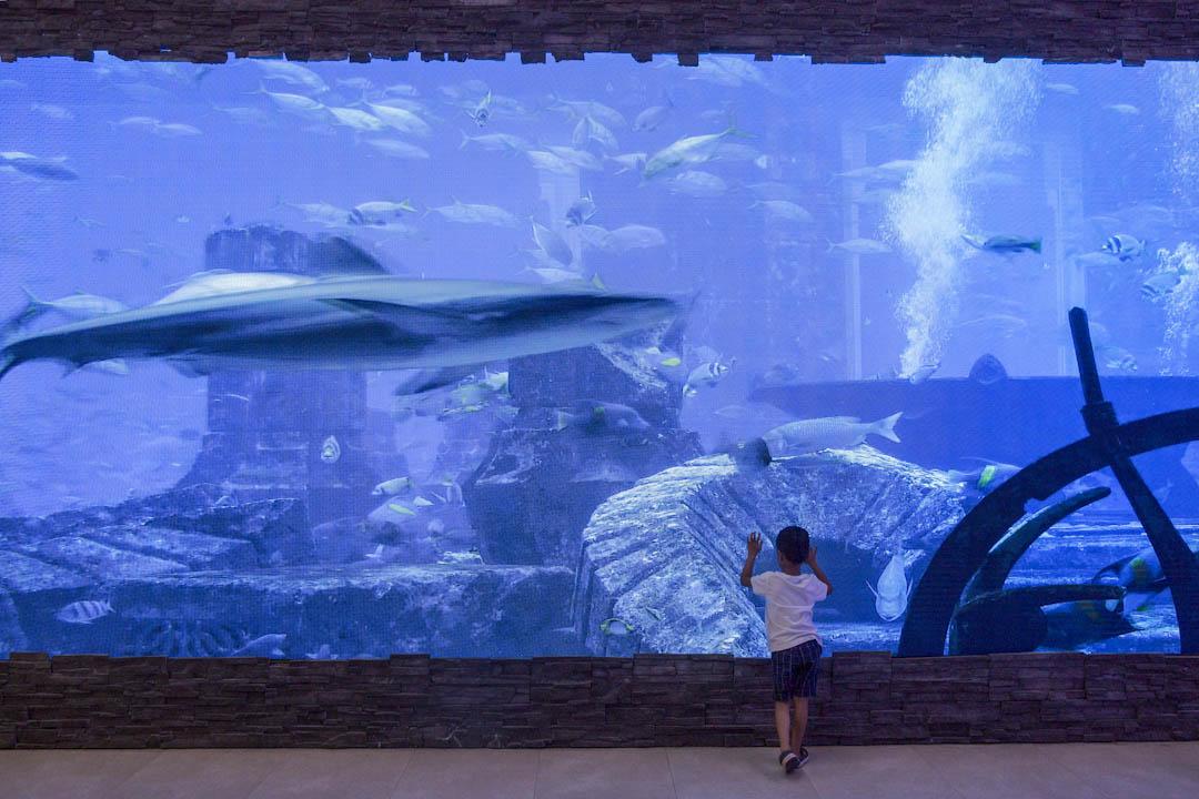 青衣長發街市現外判給建華集團管理,街市內裝置一個巨大的電子螢幕,循環播放著水族箱般的畫面。