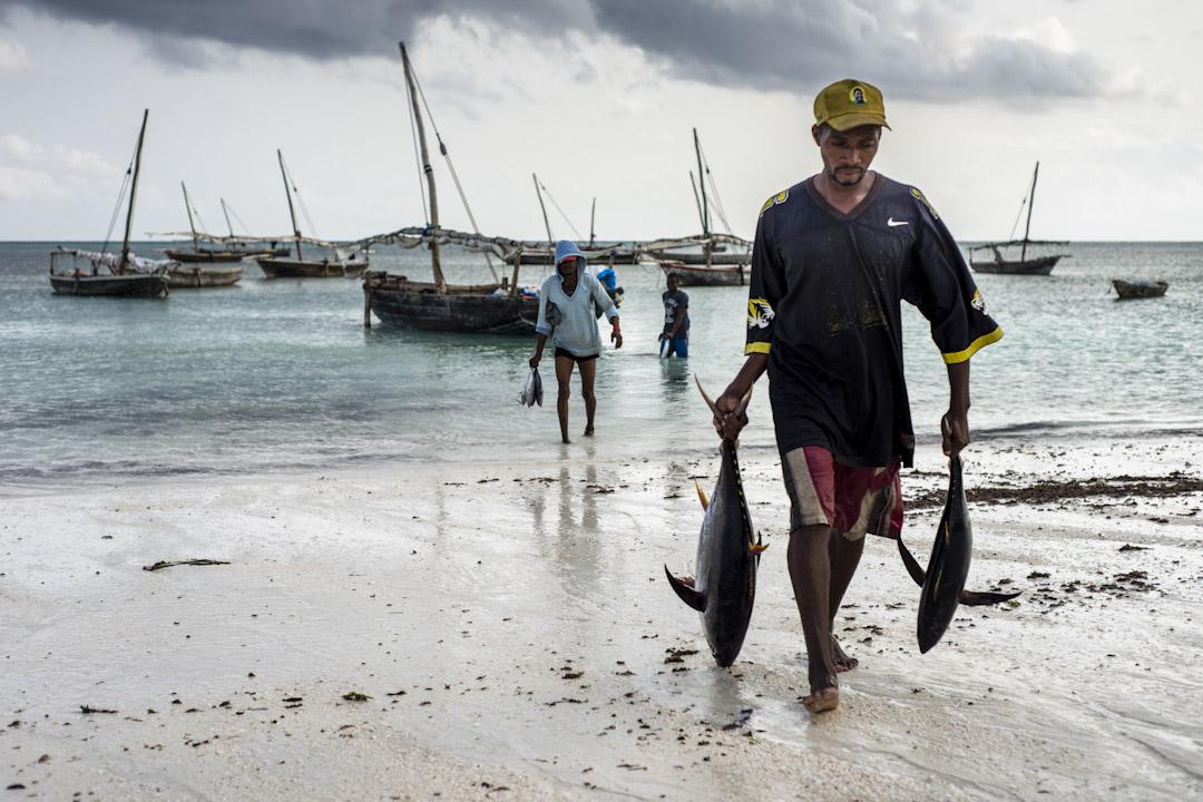 非常漁民將黃鰭金槍魚拿到桑給巴爾Nungwi村附近的漁市場。
