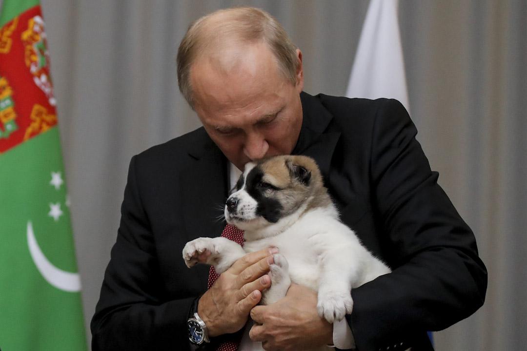 2017年10月11日,在俄羅斯城市索契接受總統普京會見期間,土庫曼斯坦總統別爾德穆哈梅多夫 (Gurbanguly Berdimuhamedov) 把一隻土庫曼牧羊犬贈送給普京。