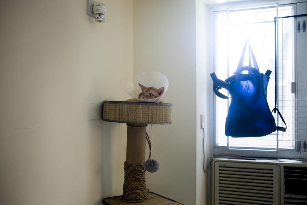 養貓是文青不成文的規定,王樂儀便有兩頭,不幸患上心臟病及腎病,每個月幹掉四千至七千元醫藥費。