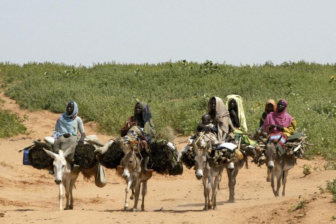因為中國人要抵抗衰老,導致非洲貧困人口賴以為生的牲畜被盜殺,這大抵是驢皮貿易在國際社會引起爭議的最主要原因。圖為非洲婦女以驢作為運輸載運的用途。