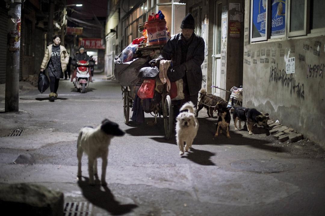 2017年2月16日,一名男士在北京黑橋村民街的一條街上與他的狗走路時,推著他的三輪車載滿了東西。  攝:Nicolas Asfouri /AFP/Getty Images