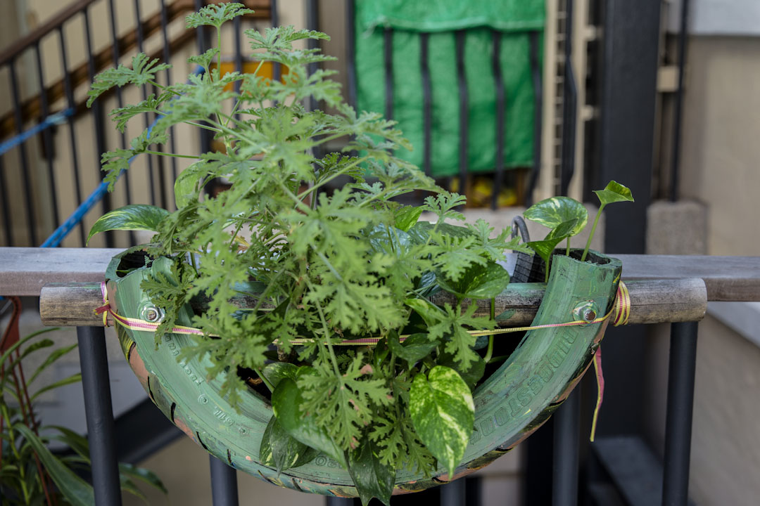 由藍屋住戶設計,以輪胎製成的盆栽。