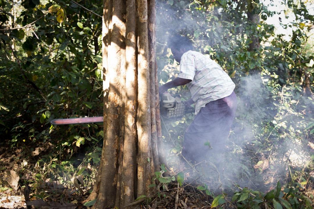 根據緬甸林務法,合法的木頭必須要有緬甸自然資源暨環境保護部下屬的國有企業緬甸木業公司的蓋章,且必須從仰光的海港出口,任何從陸路出口的木材都是非法的。 攝:Ann Wang/端傳媒