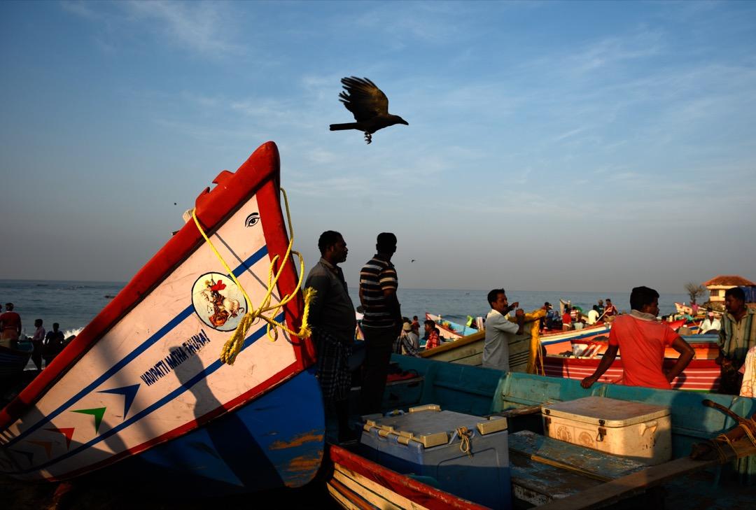 2017年12月18日,印度喀拉拉邦的一條漁村,漁夫們在早上點算昨晚出海捕魚的漁獲。