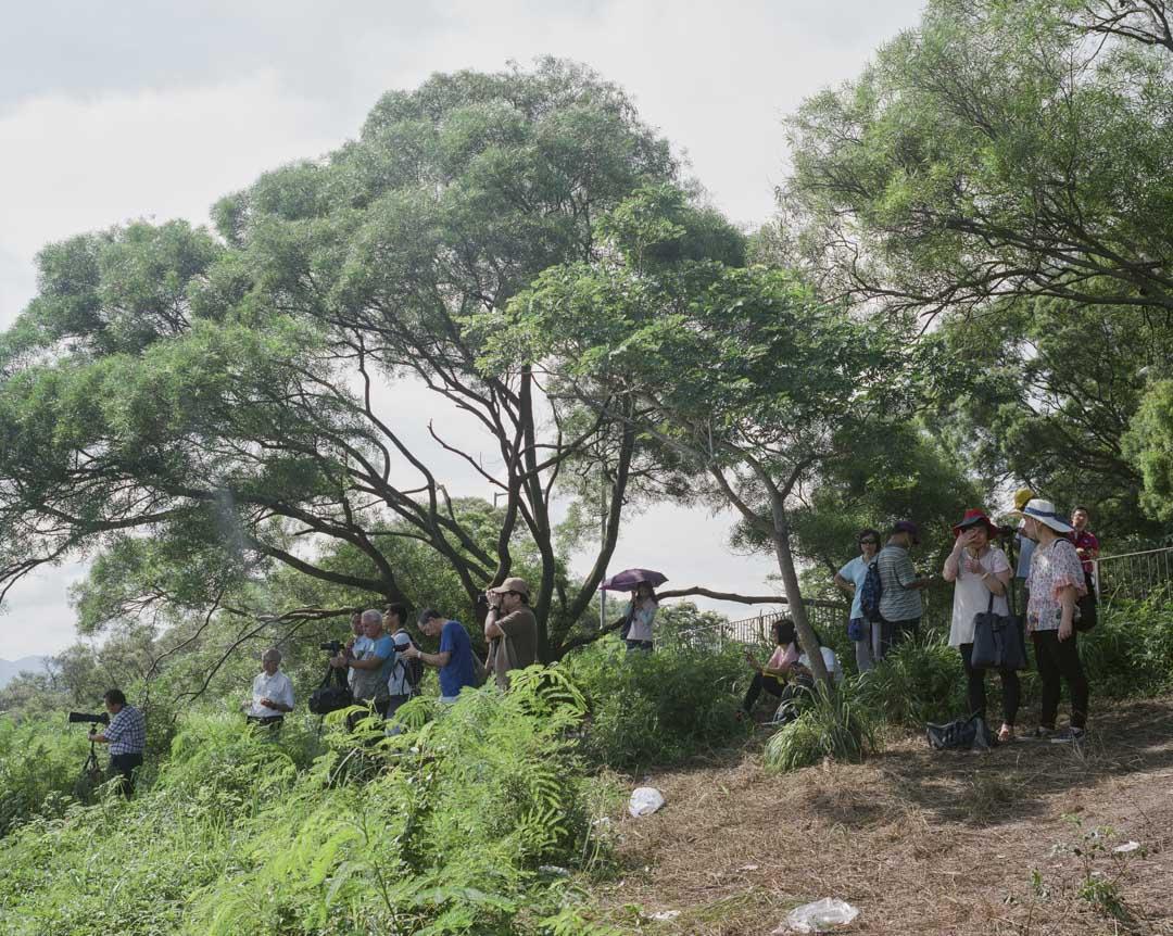 2017年7月,中國航空母艦「遼寧號」訪港,期間停泊在大嶼山以東附近海域,市民在青衣一個山坡上遙遠觀看。