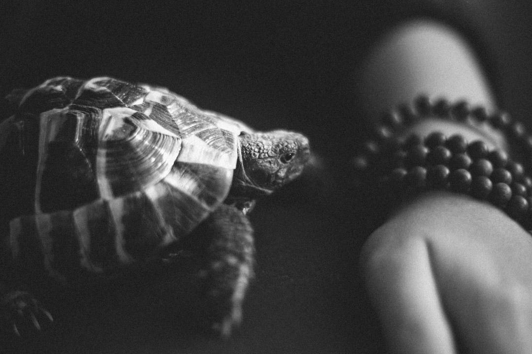 在柏林的公寓裏,潘岱靜收養着一隻烏龜。