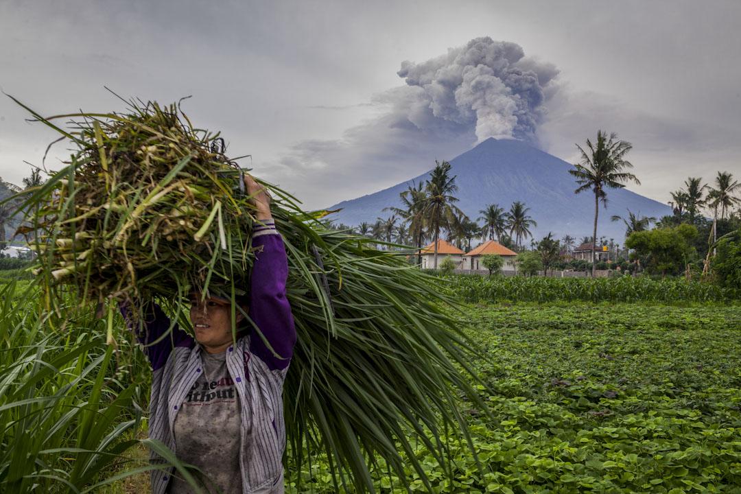 2017年11月28日,印尼峇里島阿貢火山(Mount Agung)噴發濃煙,隨著強度的增加,多達10萬名附近居民需要撒離危險區域,數萬名遊客因機場關閉而被困。 攝:Andri Tambunan/Getty Images