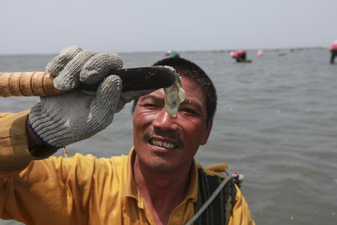 2011年,彰化大城鄉民在潮間帶集體撿散蚵。