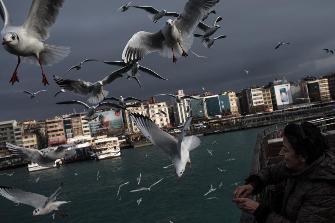 2018年1月16日,土耳其城市伊斯坦布爾,一名女子在渡海輪上餵飼海鷗。