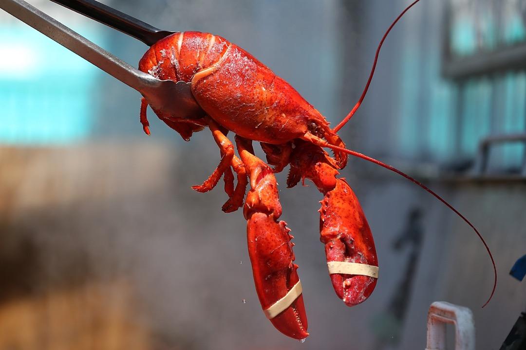 近日瑞士立法禁止餐廳沸水煮活龍蝦,因會另其感到痛楚而不人道。 攝:Justin Sullivan/Getty Images