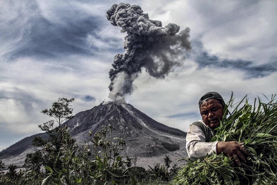 2018年1月6日,印尼北蘇門答臘省卡羅縣,錫納朋火山噴出厚厚的濃煙,一名男子在菜田上收割蔬菜。