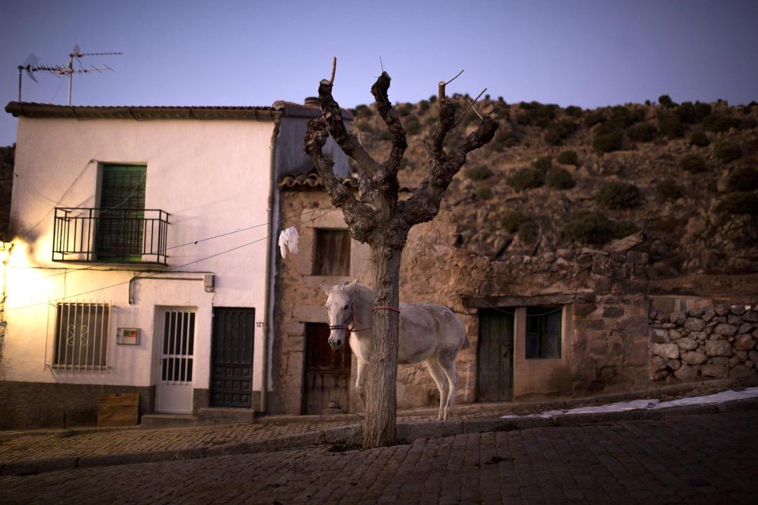 2018年1月16日,西班牙首都馬德里舉行慶祝聖安東尼節前夕Fiesta de las Luminarias活動,參與者們會騎著馬匹衝過火堆,有淨化和保護馬匹的意義。一匹馬站在活動舉行附近的街道上。