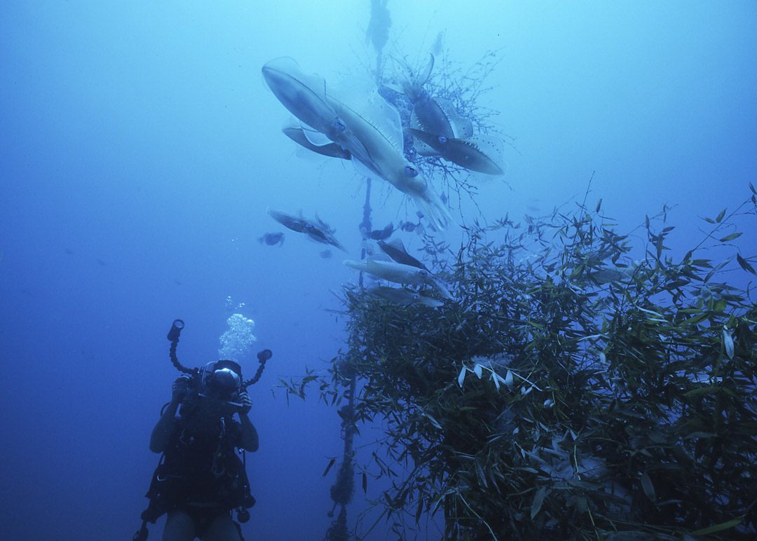 海洋保育志工進行水下攝影紀錄。