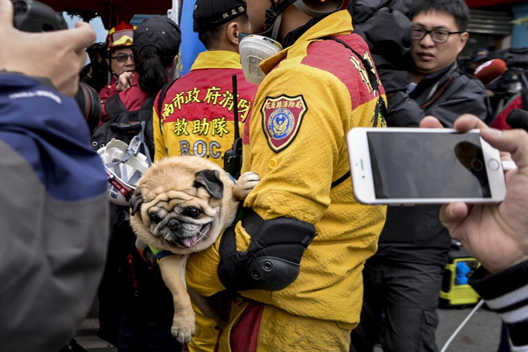 中午十二時,救災人員在雲翠大樓現場拯救了一隻小狗。