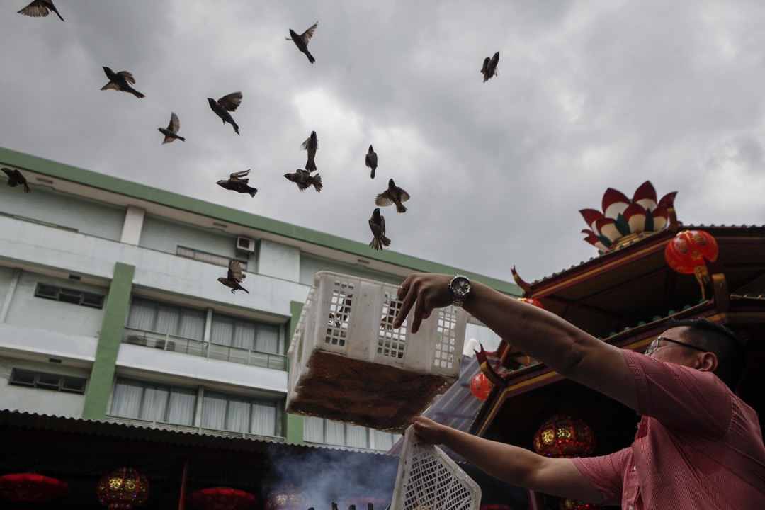 2018年2月16日,印尼雅加達,當地華籍民眾到 Petak Sembilan 寺把一群雀鳥放生,寓意好運來臨。