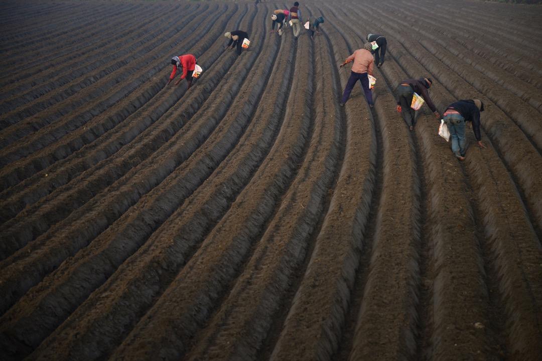 2018年2月16日,印度賈朗達爾,有農夫在市郊的田園播種。