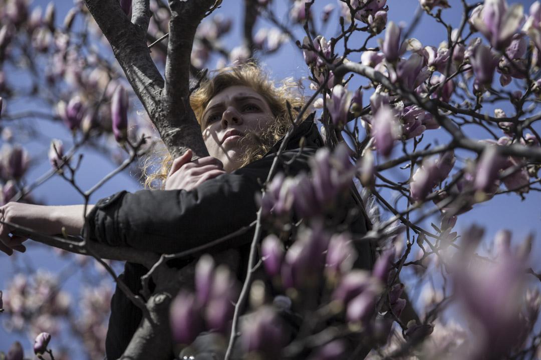 美國首都華盛頓,一名遊行參加者攀到紫玉蘭樹上聽台上的講者發言。