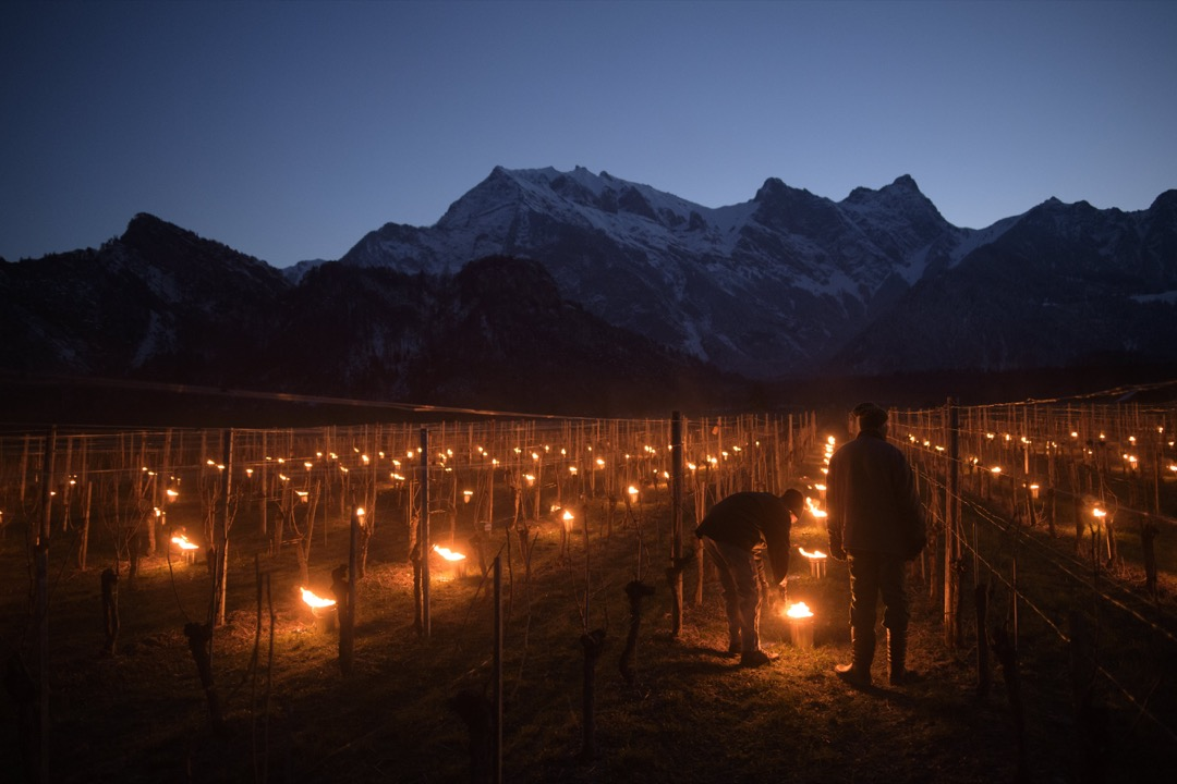 2018年3月22日,瑞士格勞賓登州小鎮弗萊施 (Flaesch),園丁在葡萄園點起蠟燭,以防葡萄在晚上結霜。