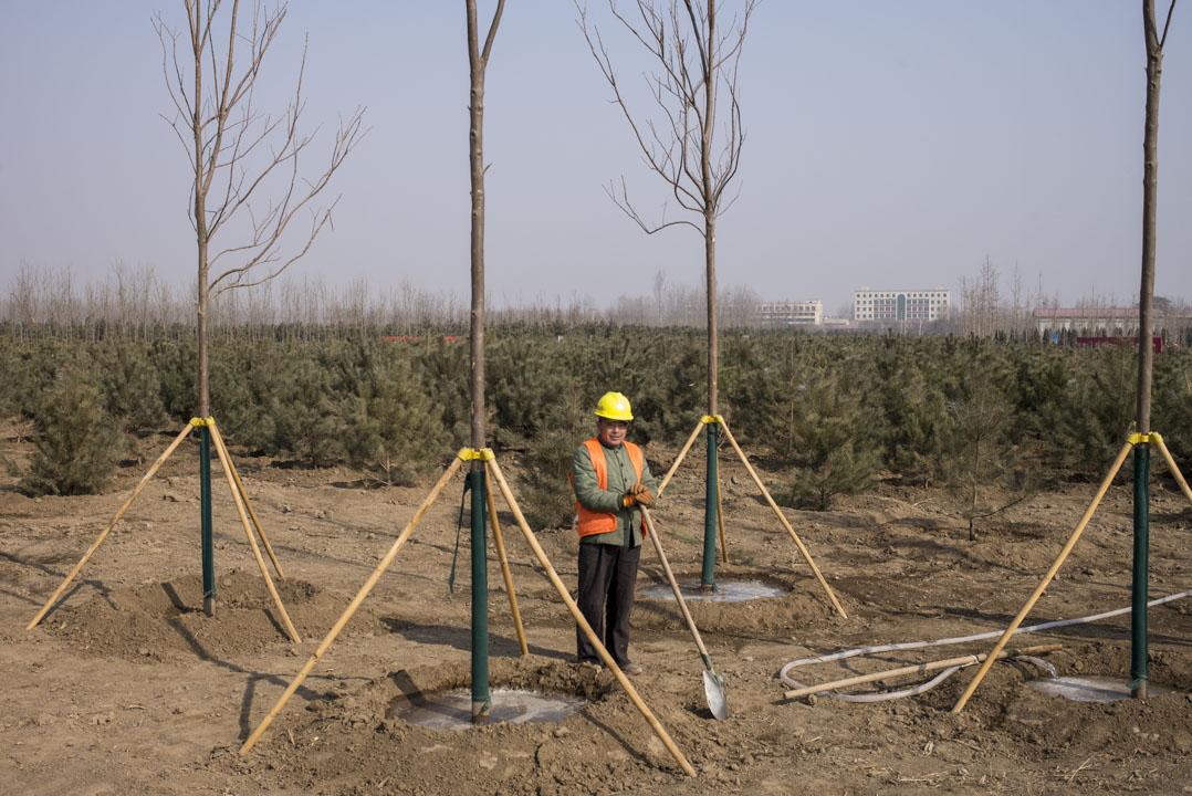 萬畝森林是雄安新區「千年秀林」工程的一部分,按規劃,新區森林覆蓋率將達40%以上,位於容城與雄縣交界處的一萬畝地被選為工程的第一步。