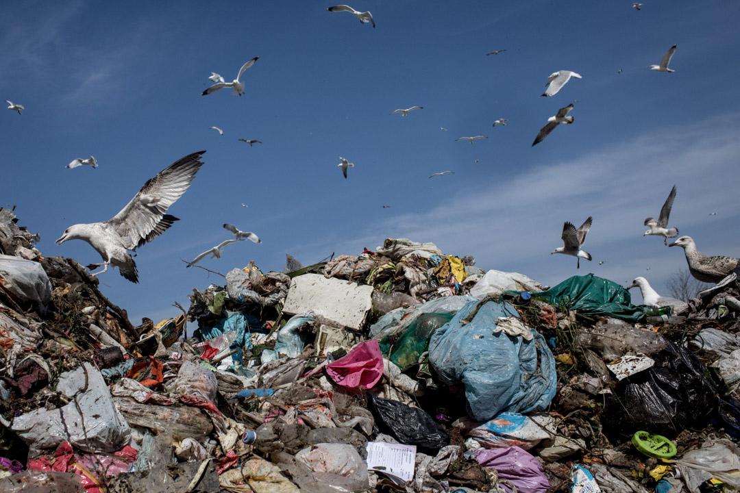2018年3月12日,土耳其伊斯坦布爾,海鷗在一所廢物處理廠內翻垃圾。