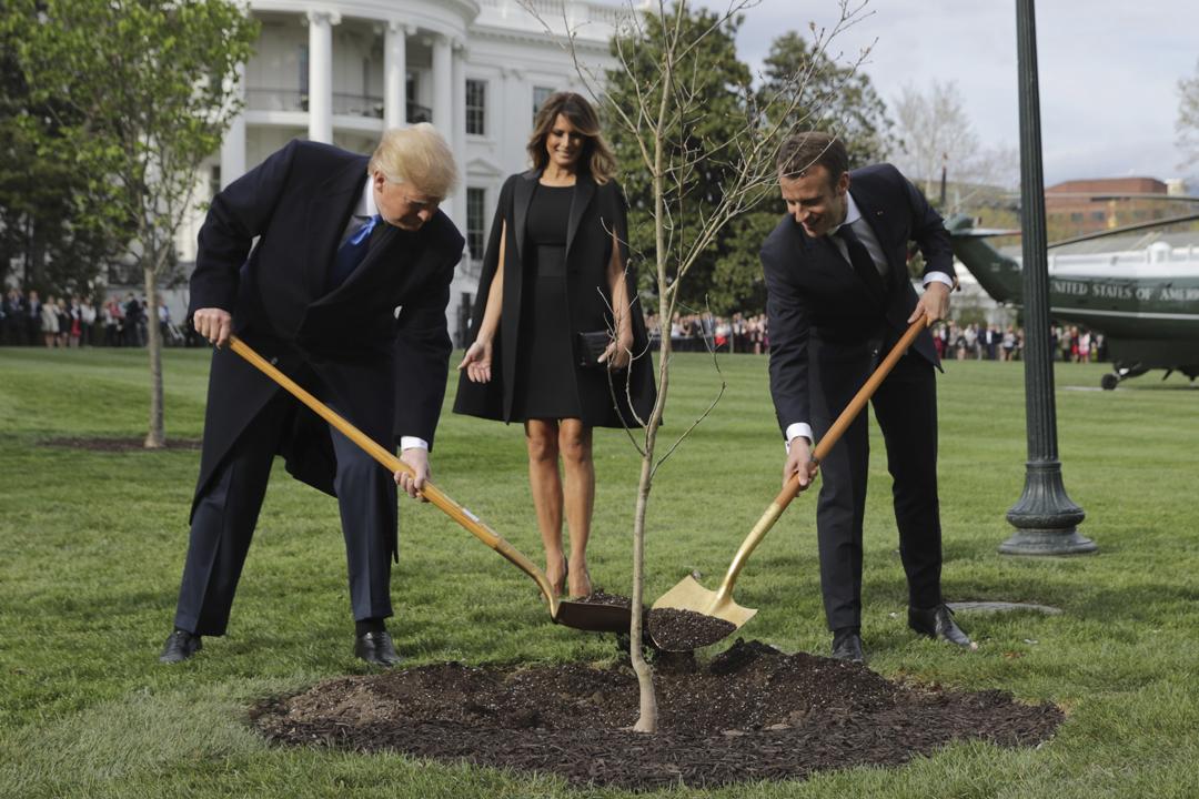 美國總統特朗普在白宮迎接到訪的法國總統馬克龍,兩人隨後一同在白宮南草坪種植一棵象徵美法友誼、紀念一戰在法陣亡美軍的無柄橡樹。 攝:Chip Somodevilla / Getty Images