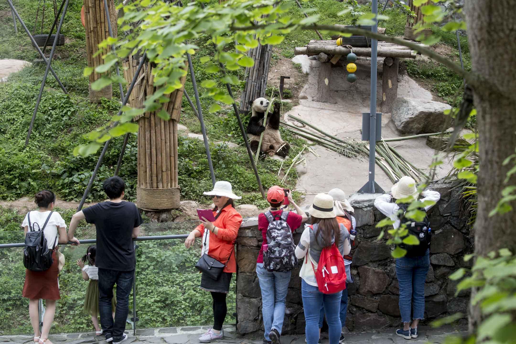 都江堰熊貓基地邀請了西南建築研究院的錢方「操刀」,摒棄原先的現代建築設計,採用四川民居風格,用園林將一組一組的建築物連接。