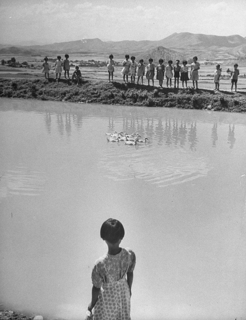 1950年代的朝鮮戰爭,造成韓國有200萬孤兒,接下來的六十多年裏,至少有20萬韓國孩子陸續被西方家庭領養,大部分來自美國,其餘多是歐洲。