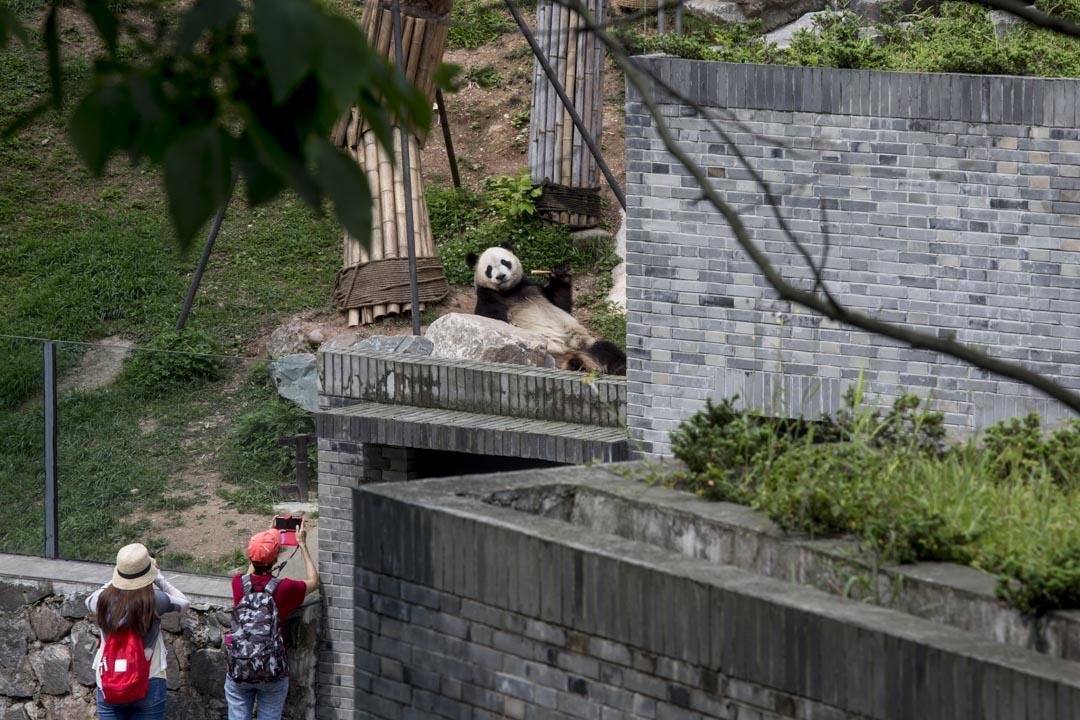 這是香港有史以來最大規模的對外援建,投資超過100億港幣。它集結了香港社會四面八方的力量:除卻牽頭的香港政府,還有工程、建築、康復醫學等各界別的資深人士和大大小小數十間NGO。圖為香港特區政府資助援建,都江堰大熊貓救護與疾病防控中心。