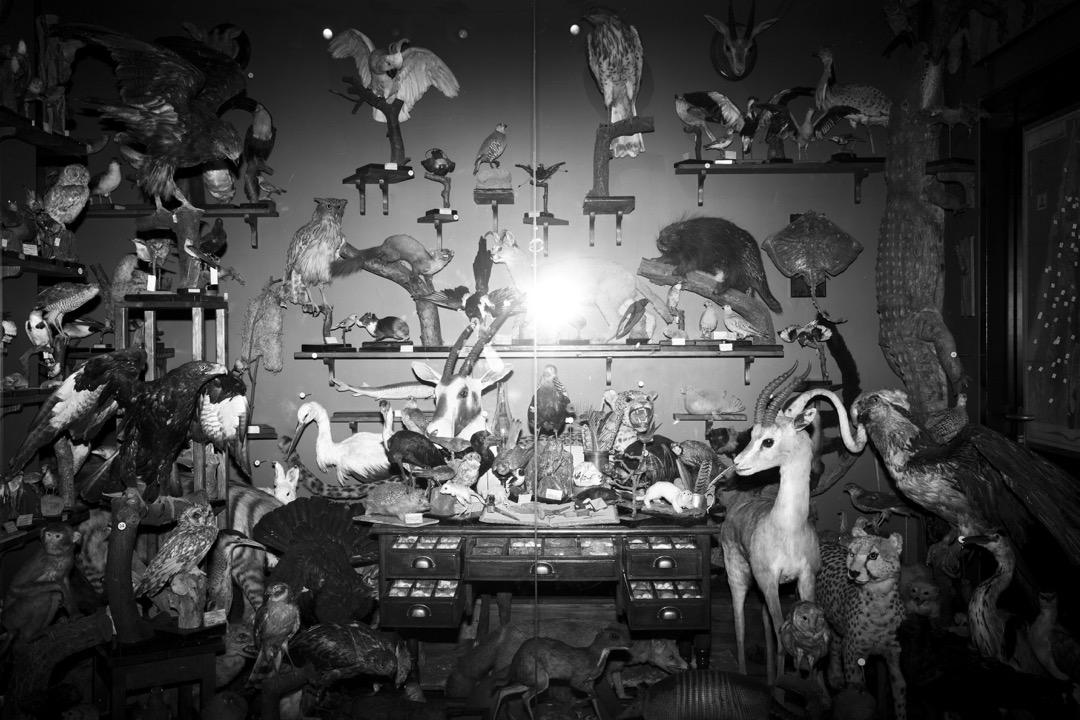 博物館即將展出德國自然主義者和天主教神父Ernst Johann Schmitz,約一個世紀前於居於聖地(以色列、巴勒斯坦和黎巴嫩一帶)時收藏的動物標本。