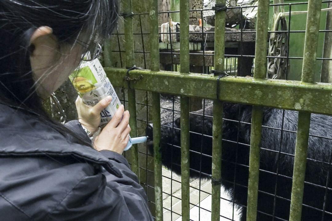 動物在野外有八成的時間都在為了生存而覓食,籠內動物每日早晚固定兩餐,飽食終日,無所事事。