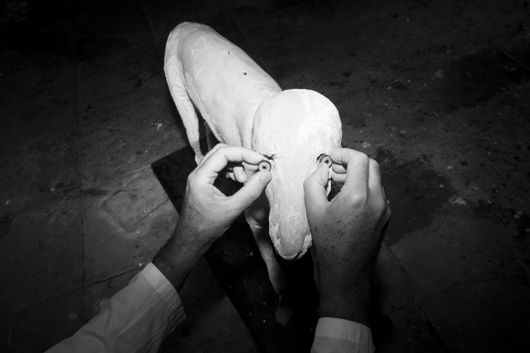 展覽設計師為即將展出的一隻獵狗標本嵌上雙眼。