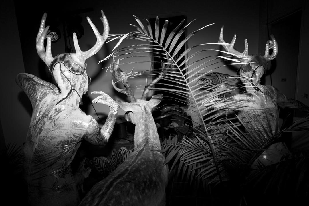 自然歷史博物館舉辦活動,表演者在鹿標本旁邊跳舞。