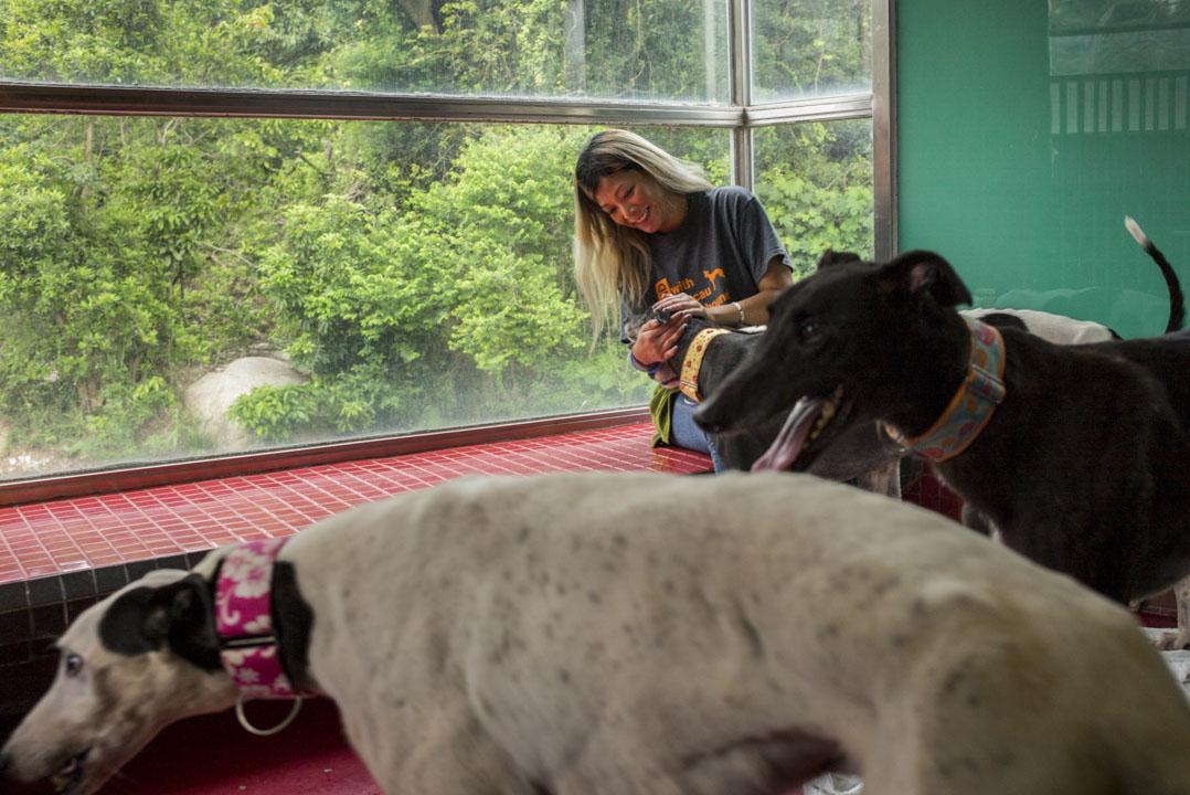 澳門愛護動物協會動物收容所主管鄧詠恩與從逸園賽狗場領養回來的格力犬。