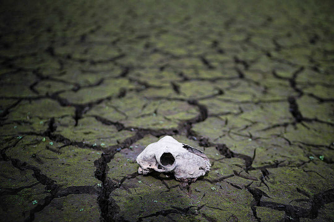 2018年7月23日,英國城鎮博爾頓,有水庫出現乾塘現象,水庫床龜裂,現出一隻動物的頭顱骨。