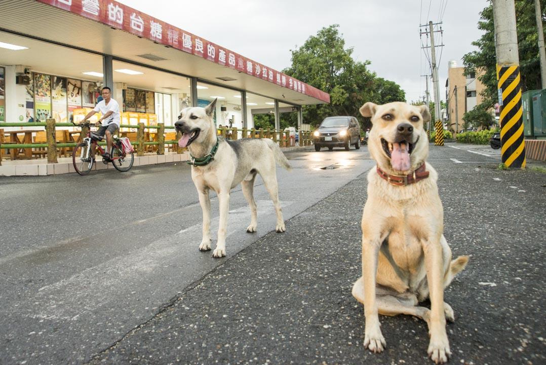 胡梓康每隔幾天,會上超市一趟,採買他與鄰居兩隻狗的食材;不造舟的日子,他就採着單車,依舊往山海去。