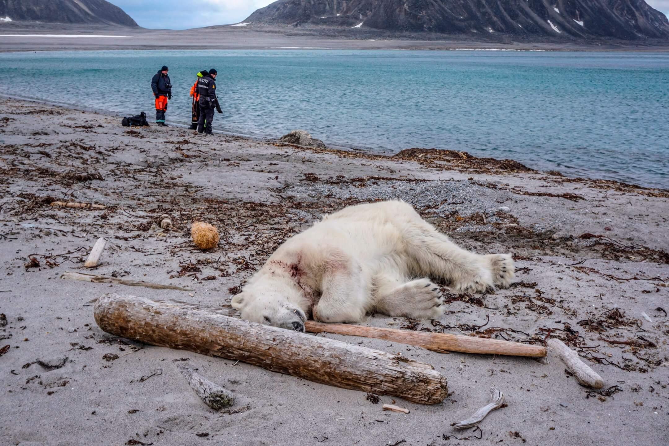 2018年7月28日,挪威斯匹茲卑爾根島以北的一個海灘,一頭北極熊被一名船員射殺。挪威有關部門稱,一名MS Bremen 遊輪的船員帶領遊客下船遊歷時被該頭北極熊襲擊,另一位船員為保護同事而射殺北極熊。