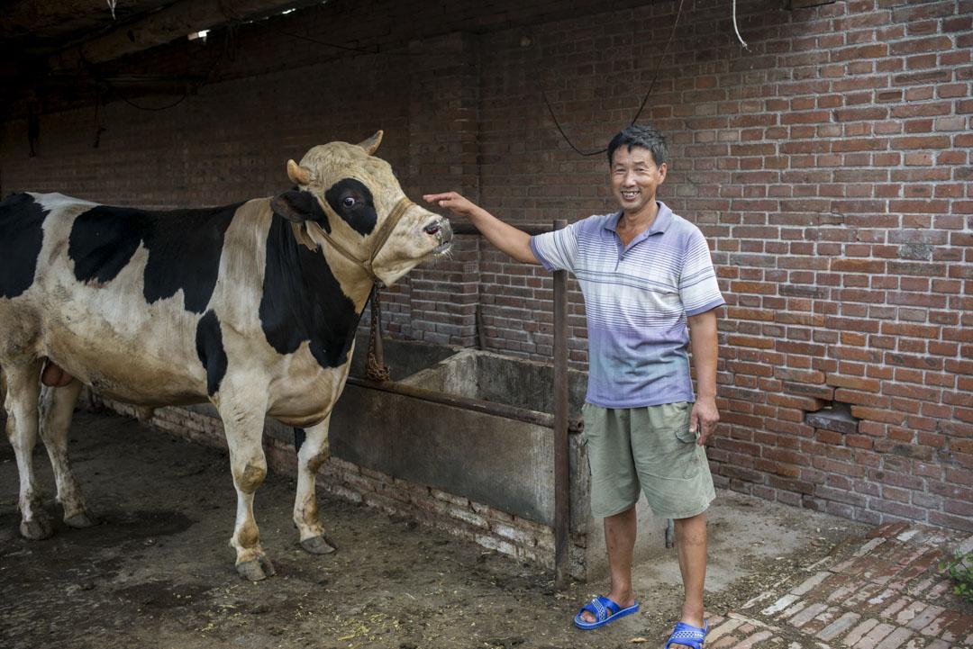 九門村禁養奶牛後,趙月俠又買了30來頭肉牛養。他今年53歲,家中七口人,還有兩個正在讀書的孫輩,「不養牛活不下來。但肉牛沒有奶牛掙錢。」