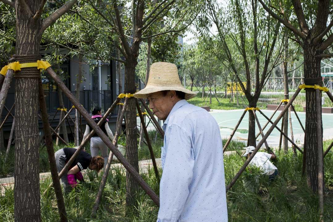 烈日下,園區內的一個綠化工人。
