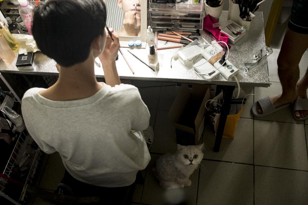 八里朋友家的貓。