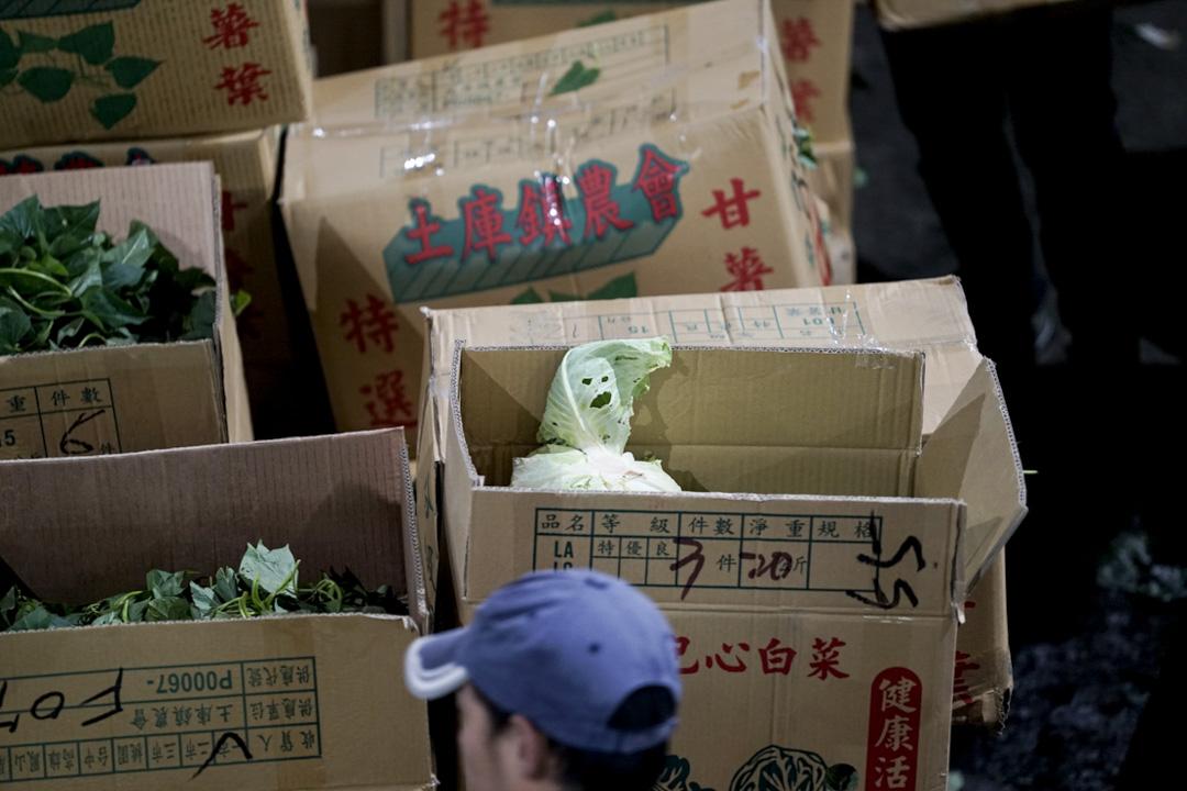 北農市場內的一顆高麗菜。高麗菜,人稱台灣菜母,是台灣最受歡迎的菜種,拍賣量大。