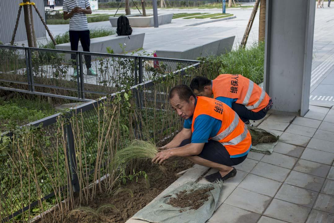 幾個工人蹲在地上修復塌陷的花壇。