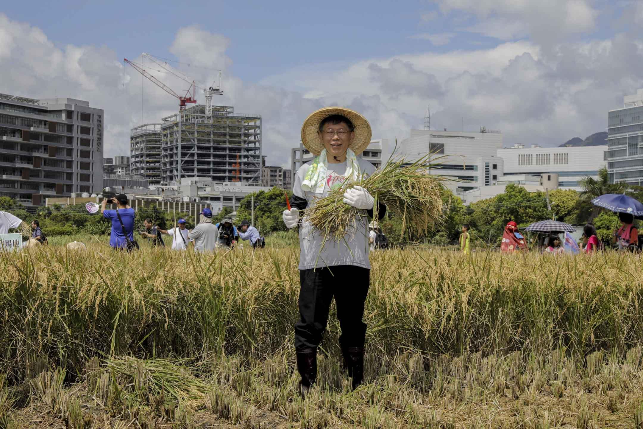 2018年8月,柯文哲建請農委會讓售北農公司22.76%股權給北市府,此建議形同終結北農由農委會(中央政府)、北市府(地方政府)與農會(供銷單位)三方共同持股的局面,改由北市府與農會系統共同經營這家全台最大、同時兼具官民營色彩的農產運銷公司。圖為台北市長柯文哲在2018年7月出席台北一個割稻活動。 攝:Daniel Shih/AFP/Getty Images