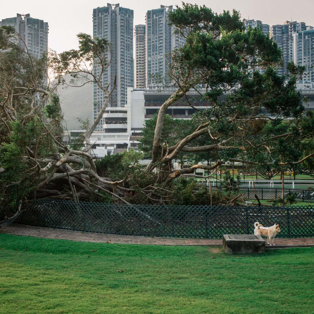 彭福公園。