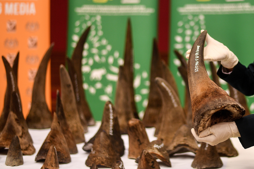 中國國務院宣布容許在「特殊情況」下使用和買賣犀牛角、虎骨及相關製品,被世界自然基金會(WWF)批評為「大倒退」。 攝:Manan Vatsyayana / AFP / Getty Images