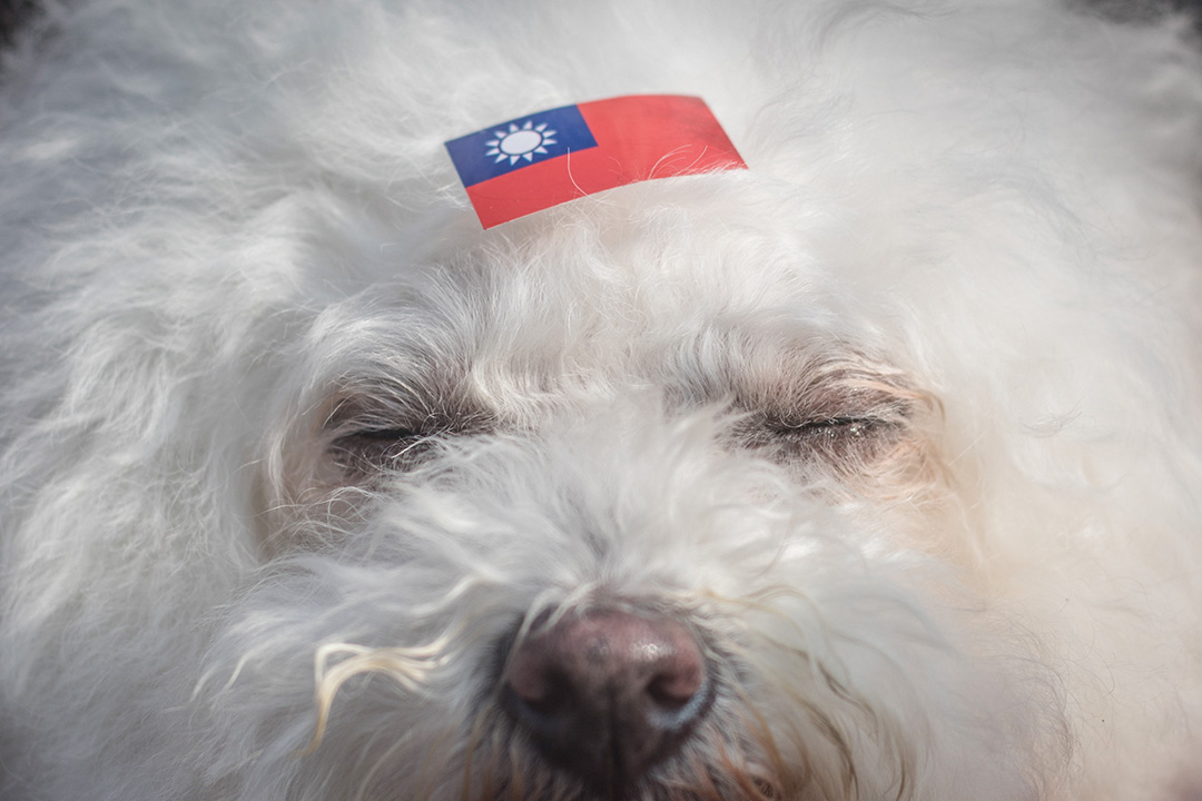 台北市長候選人丁守中的造勢大會,支持者為自己的寵物貼上國旗。